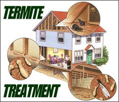 http://termiteinspect.org/tips-in-using-the-best-home-termite-treatment/ Termites are using pheromones or special chemical scent to communicate with each other. Moreover, they also leave their scent trails to direct other termite workers. In some termite species, the queen termite can even take control of the colony's growth or development simply by feeding her young with pheromone-laden poop.