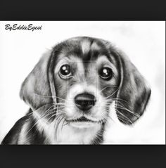 little dog - puppy - pet - animals art - pecil drawings