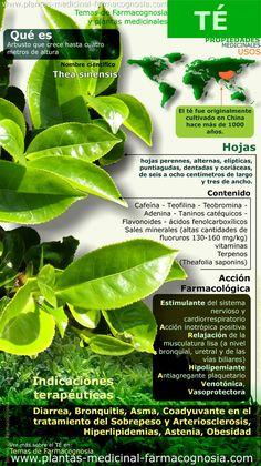 Propiedades del té. Infografía. Resumen de las características generales de la planta de Té. Propiedades, beneficios y usos medicinales más comunes del Té..