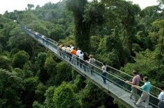 Walking among the trees at MacRitchie is one of the awesome free things to do in Singapore