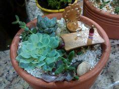 Mini Jardim Cabernet com Suculenta