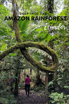 Amazon rainforest | Napo wildlife center | Amazon jungle | Amazon in Ecuador | Things to do in Ecuador | South America trips | Best places to travel in South America
