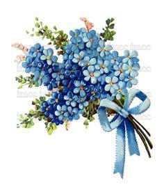 Large Chic Victorian Shabby Forget Me Nots Flowers Floral Art Digital Download Scan U Print ECS Item scn0007