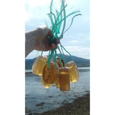 Glycerine seaweed soaps on a ghostrope. Seaweed Soap, Glycerin Soap Base, Soap On A Rope, Soaps, Etsy Seller, Hand Soaps, Soap