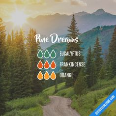 Pine Dreams - Essential Oil Diffuser Blend