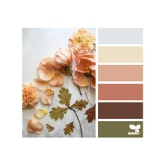 design seeds | search | for all who ♥ color ❤ liked on Polyvore featuring colors