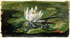 LaFarge water lily