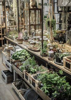 garden center design, nursery, flower shop, florist