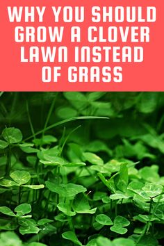 50 best clover lawn images clover lawn lawn lawn on landscaping ideas that will transform your yard a few points to consider before you start id=25413