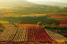 vineyards in La Rioja Basque Country, Wine Country, Country Life, Rioja Spain, Rioja Wine, Sonoma Wineries, Porto Portugal, Spanish Wine, Honeymoon Destinations