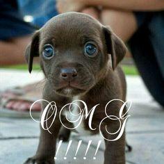 Puppies are so cute! Puppy Pictures, Labrador Retriever, Pitbulls, Photos, Puppies, Dogs, Cute, Animals, Dog Photos