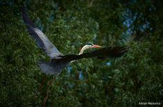 _NAP7206-4 Danube Delta, Boat Tours, Bird Watching, Landscape, Animals, Scenery, Animales, Animaux, Animal