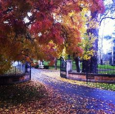 Autumn in the Adelaide Hills