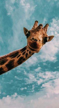 Wallpaper iphone cute giraffe wallpapers 65 new Ideas Cute Wallpaper Backgrounds, Animal Wallpaper, Disney Wallpaper, Cute Wallpapers, Elephant Wallpaper, Wallpaper Wallpapers, Cute Iphone Wallpaper Tumblr, Iphone Wallpaper Photography, Baby Blue Wallpaper
