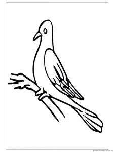 swallow printable coloring pages for kindergarten Swallow