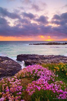 Godrevy Head, Cornwall England More Beautiful World, Beautiful Places, Beautiful Scenery, Places Around The World, Around The Worlds, Landscape Photography, Nature Photography, Photography Flowers, Cornwall England