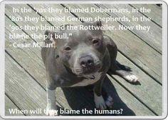 Fridge Magnet Pit Bull dog Cesar Millan Quote Staffordshire bull terrier pet   eBay