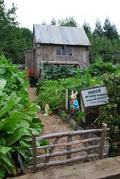 Mr. McGregor's potting shed and vegetable garden...
