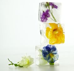 Floral Cubes /  Martha Stewart Living