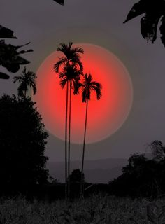 Silhouette of Palm trees & Red moon art Beautiful Moon, Beautiful World, Beautiful Places, Amazing Places, Simply Beautiful, Stars Night, Amazing Photography, Nature Photography, Travel Photography