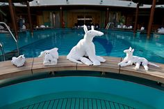 Loved going to my room at night and finding these little guys! OK, folks.take a few photos, but the towel animals won't be signing autographs today. Vacation Wishes, Dream Vacations, Cabana, Carnival Dream Cruise, Carnival Breeze, Towel Animals, Love Boat, Cruise Travel, Ways To Travel