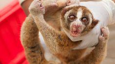 Sale On, Bbc News, Internet, Facebook, Pets, Top, Animals, Beautiful, Animales