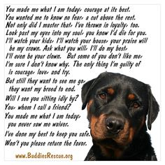 rottweiler this is soooo very true our Rottie was a great big softy who loved us unconditionally it's how they are brought up and who by that's the problem not these beautiful loyal dogs I Love Dogs, Puppy Love, Cute Dogs, Dog Quotes, Animal Quotes, Rottweiler Love, Rottweiler Puppies, German Rottweiler, Miniature Schnauzer