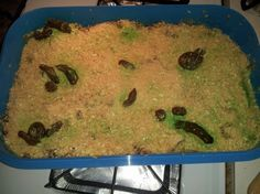 Kitty litter cake recipe april fools day