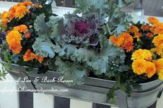 For the First Day of Fall - switched out the IKEA window boxes hanging on the gazebo with tiny mums, flowering kale and kept the scaevola. Kale keeps green through the winter.