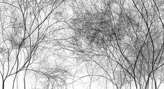 Cloud Trees 3 by Holger Lippmann