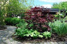 Almbacken: Margaret Bee - en rödbladig japansk lönn. Funkar inte i zon 5, men som  inspiration.