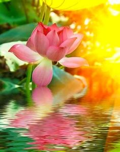 """If you feel lost, disappointed, hesitant, or weak, return to yourself, to who you are, here and now. And when you get there, you will discover yourself, like a lotus flower in full bloom, even in a muddy pond, beautiful and strong"" ~ Masaru Emoto"