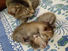 Kitty with her little ones