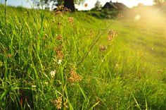 #Meadow