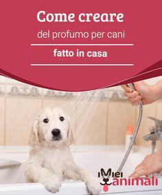 Come creare del profumo per cani fatto in casa Avete mai notato la reazione del vostro #cane quando cercate di mettergli del profumo dopo avergli fatto il #bagno? #Corre via come un #matto! #BELLEZZA E MODA
