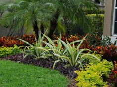 'Curb Appeal in Boca Raton Landscape Design' by Tropical color at its best! See more examples of south Florida and Palm Beach county landscape color at mela-. Servicing all of Palm Beach county, including Boca Raton, Delray Beach, Wellington, town of Palm Florida Landscaping, Florida Gardening, Tropical Landscaping, Outdoor Landscaping, Landscaping Plants, Front Yard Landscaping, Landscaping Ideas, Landscaping Software, Luxury Landscaping
