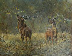 """Kudu Bulls"" by Robert Teeling. Oil on Canvas Board. 50cm x 40cm Finalist in The International Artist Magazine Wildlife Competition 2014. Featured in Issue #99 Oct/Nov 2014. www.robteelingart.com"