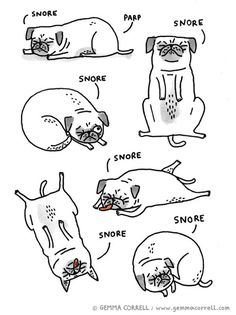 "They gave me this guide called ""What to Expect When You Are Pug Sitting""..."