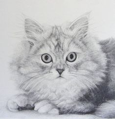 Pet Portraits - How to draw fur in graphite.  Cat step by step drawing tutorial by Katrina Ann.  #Animal Drawing Tutorial