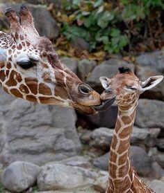 Kipenzi getting kisses from mom Katie.
