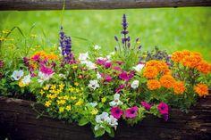 10 letných rastlín, ktoré prežiaria každý kút Herb Garden, Home And Garden, Planting Seeds, Container Gardening, Helpful Hints, Diy Crafts, Plants, Chata, Housekeeping