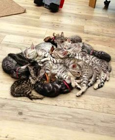 Pile 'o kittens! To me this is heaven :)