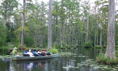 1000 Images About Moncks Corner Sc On Pinterest South Carolina Gardens And Tree Carving
