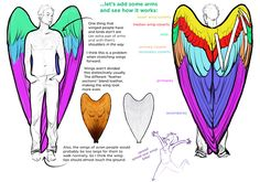 At least once in an artists life, we end up drawings wings on a human or humanoid character. Really, to do so, we should learn to draw wings properly, and learn to draw people. Both things are har… Wings Drawing, Angel Drawing, Drawing Reference Poses, Drawing Poses, Wings Tutorial, Wing Anatomy, Human Wings, Art Sketches, Art Drawings
