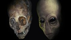 DNA test results: Paracas skulls are not human | Alien UFO Sightings