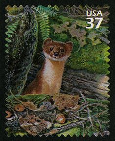 US Stamp 2005 - Northeast desiduous Forest 37c Long-tailed Weasel