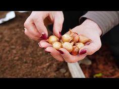 Side Garden, Noiembrie, Planting Seeds, Garlic, Vegetables, Youtube, Gardening, Farm Gate, Plant