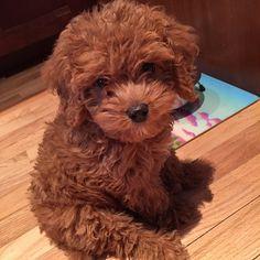 Teddy Bear or Puppy? : aww                                                                                                                                                     More