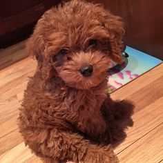 Teddy Bear or Puppy? : aww                                                                                                                                                     More