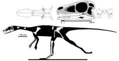 Panphagia protos, a stem sauropodomorph Dinosaur Fossils, South America, Movie Posters, Movies, Films, Film Poster, Cinema, Movie, Film